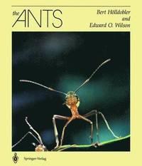 bok myror the ants