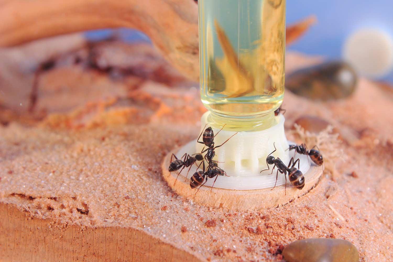 byformica myrmat liquid feeder