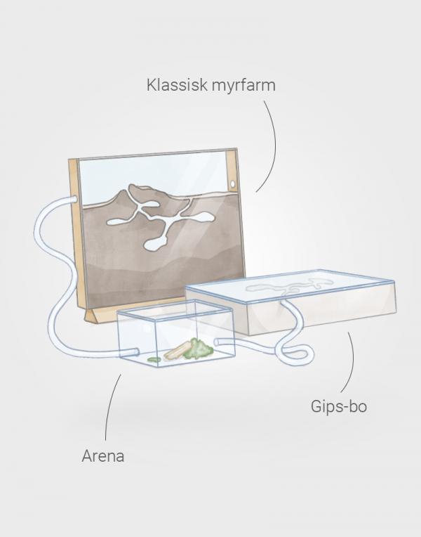 ha myror husdjur första myrkolonin produkt setup