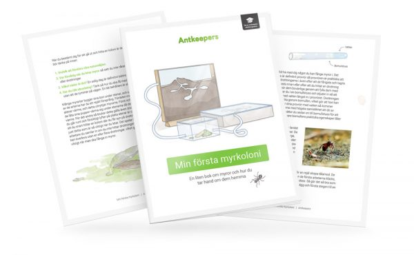 min första myrkoloni guide myror pdf