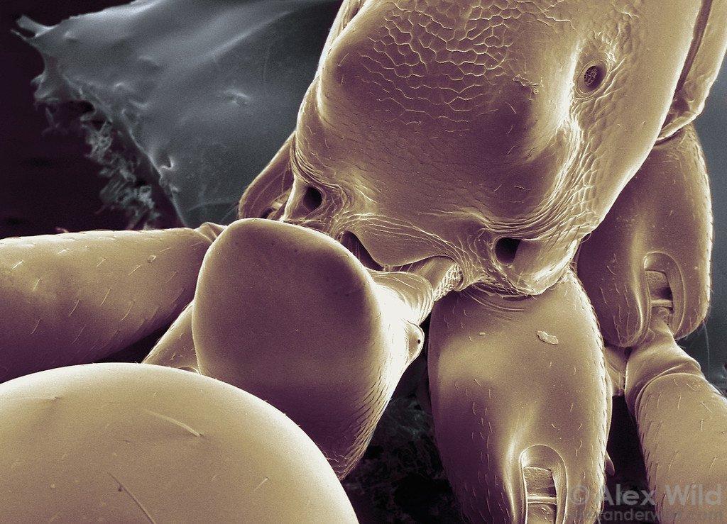 myrors anatomi