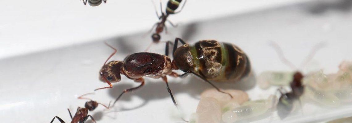 antkeepers instagram