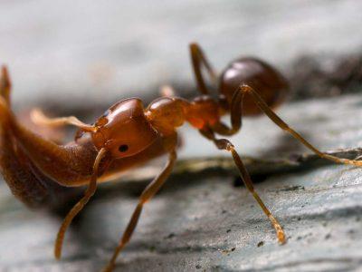 myra fakta stark myra