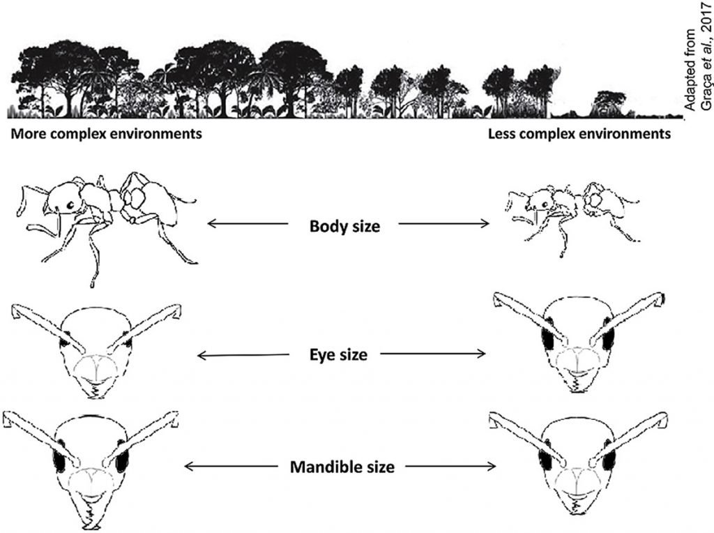 Ant research