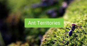 Ant Territories