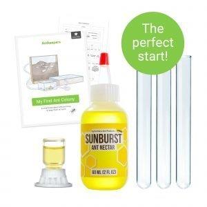 Ant shop AntKeepers starter kit