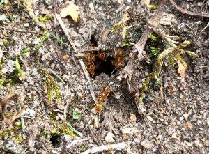 Ants waking from hibernation