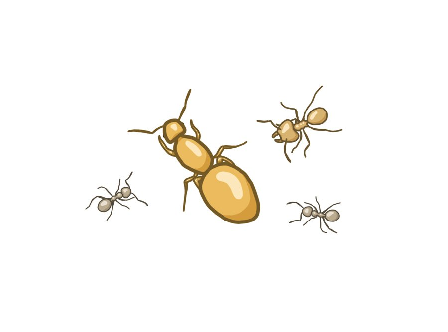 Where to buy ants