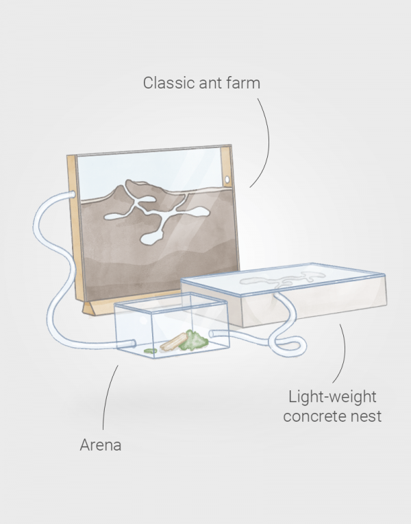 Ant guide keeping ants my first ant colony content