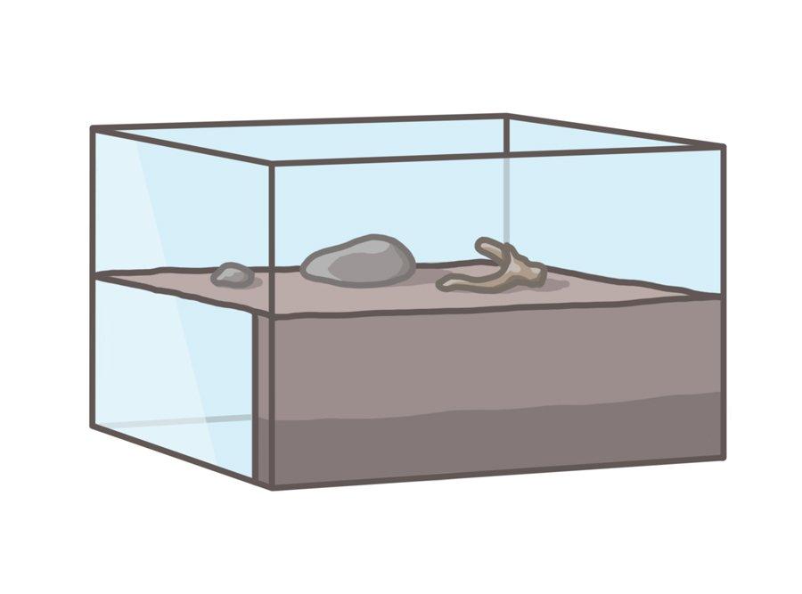 keeping ants formicarium