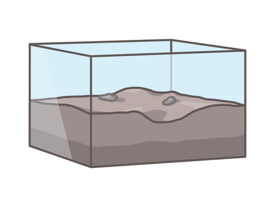 Formicarium tank