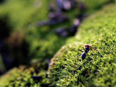 ants territories